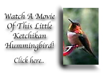 Hummingbird - click to watch a movie